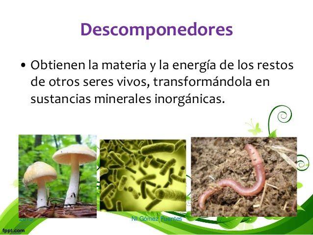 Organismos Descomponedores