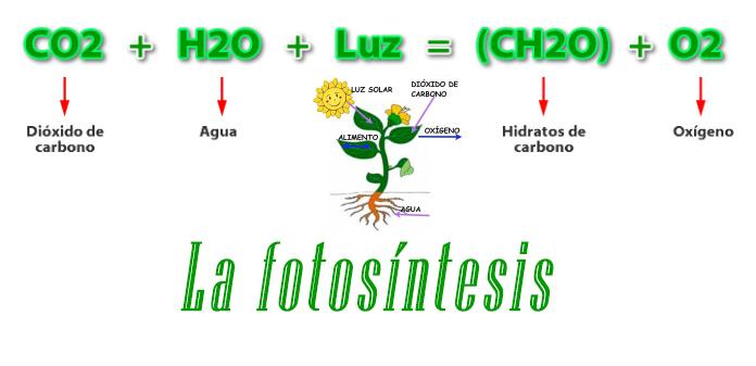 Elementos de la Fotosíntesis