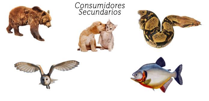 Ejemplos de Consumidores secundarios