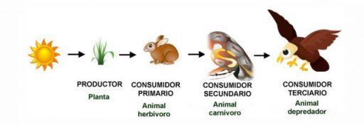 cadena alimenticia terrestre