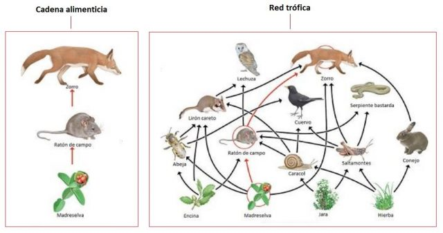 diferencia entre red trófica y red alimenticia de animales