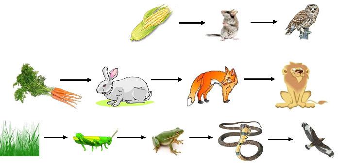 ejemplos de cadenas alimenticias de animales