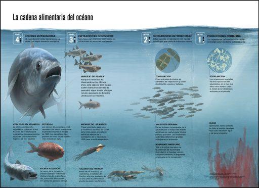 cadena alimenticia acuática ejemplo