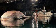 Ballena muerta en el Mediterráneo probablemente 'una de las más grandes' jamás encontradas
