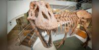 Hasta 2.500 millones de tiranosaurios rex alguna vez acecharon la Tierra