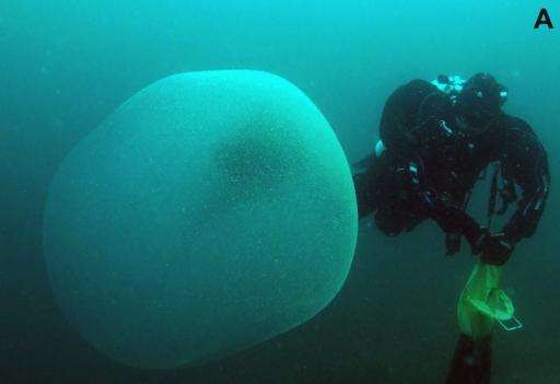 Misteriosas 'gotas' cerca de Noruega están llenas de moco y embriones de calamar, encuentra un estudio