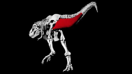 Olvídese de dejar atrás a un T.rex, probablemente podría superarlo caminando