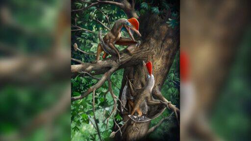 Tiny Jurassic 'Monkeydactyl' tiene el par de pulgares más antiguo de la Tierra