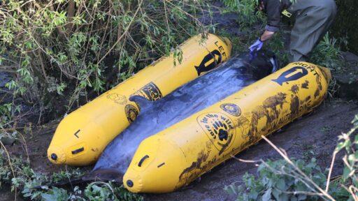 Bebé ballena minke sacrificada después de quedar atrapada en el río Támesis