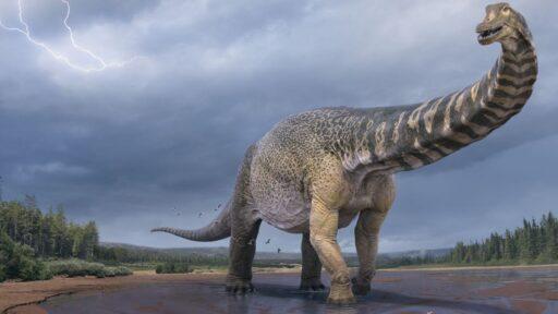 Un dinosaurio australiano que batió récords fue tan largo como una cancha de baloncesto