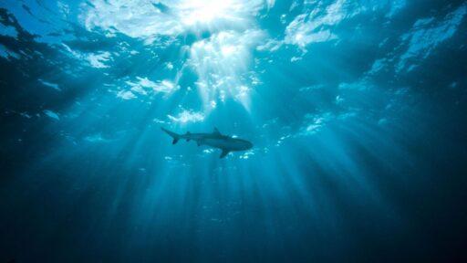 7 preguntas sin respuesta sobre los tiburones