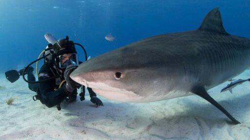 Los humanos son los verdaderos monstruos en el nuevo y sangriento documental sobre tiburones