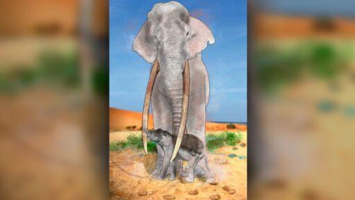 Las crías de elefantes retozaban en un antiguo 'vivero', muestran huellas fósiles